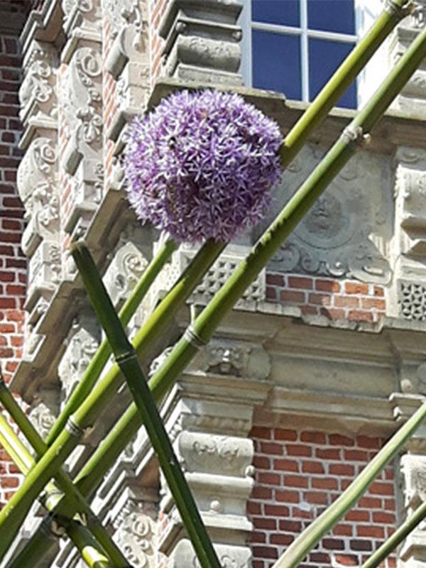 Blumen peters veranstaltungen - Gartentage thedinghausen ...