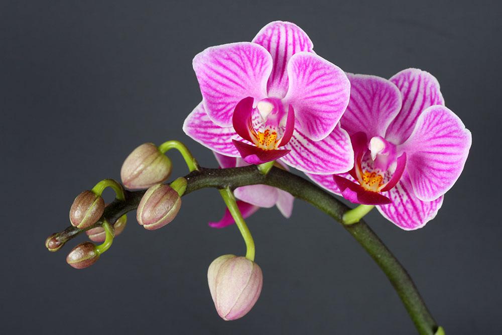 blumen peters orchideen ausstellung. Black Bedroom Furniture Sets. Home Design Ideas